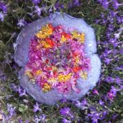 Domaine la belle vie fleurs