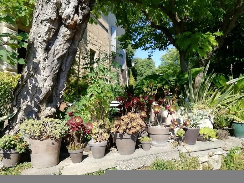 Img 20200719 172243 jardin 1 retaille 75