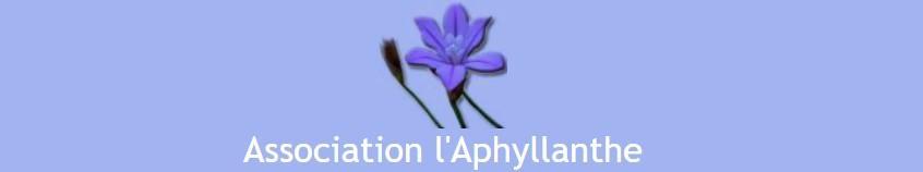 L aphyllanthe 09 2021