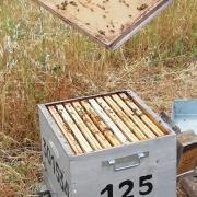 Ouverture de la ruche uz