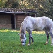 écurie cheval paddock