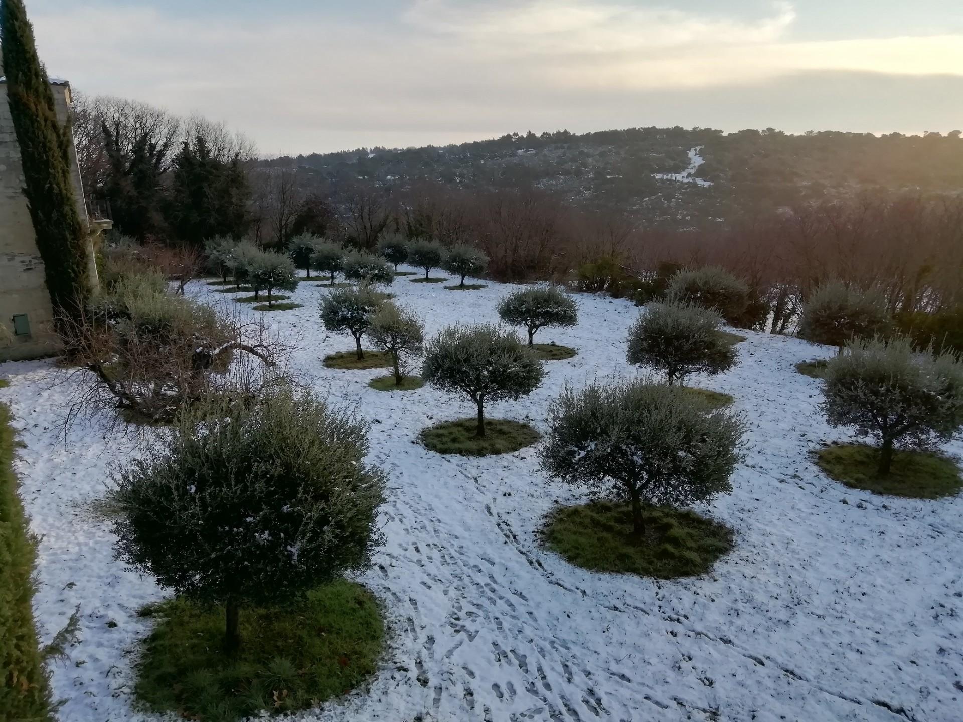 Img 20210105 085839 oliviers neige redimensionne