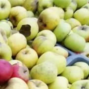 Screenshot 1 pommes